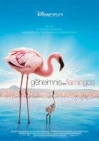 Das Geheimnis der Flamingos - Plakat zum Film